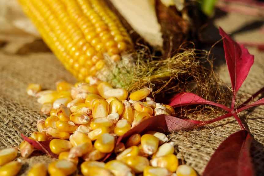Roasted Corn (2Ways)