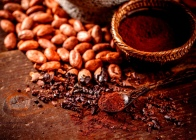 Organic cacao beans and cacao powder in spoon